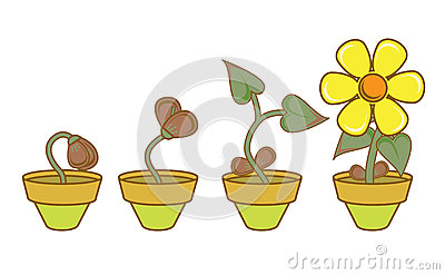 Plant Growth Stages Plant Development Stock Illustrations.