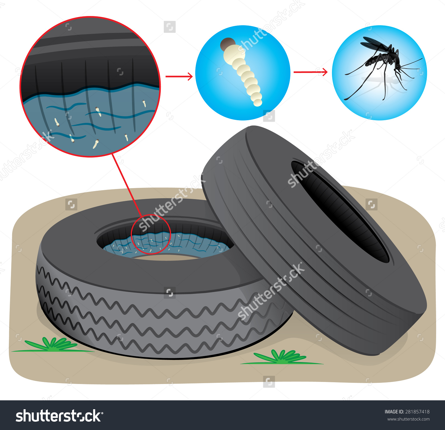 Nature Tires Stagnant Water Fly Breeding Stock Vector 281857418.