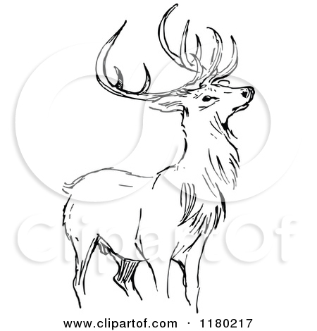 Royalty Free Stag Illustrations by Prawny Vintage Page 1.