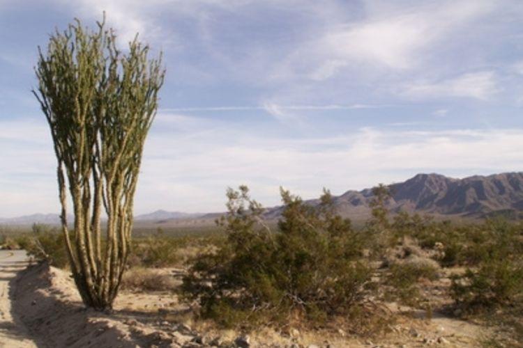 1000+ ideas about Desert Biome Plants on Pinterest.