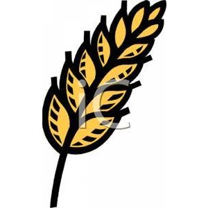 Wheat Stalk Clipart.