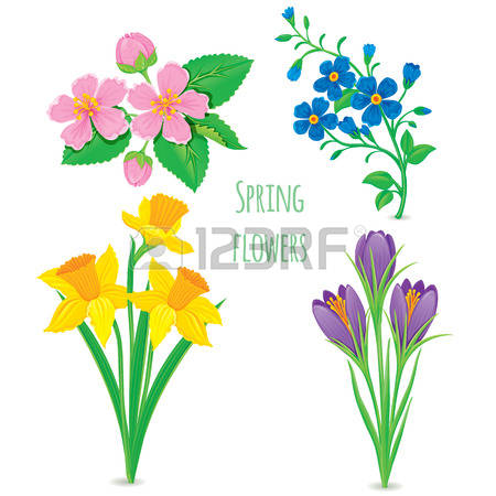 3,981 Stamens Stock Illustrations, Cliparts And Royalty Free.