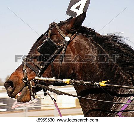 Stock Photography of The Standardbred Horse Number 4 k8959530.
