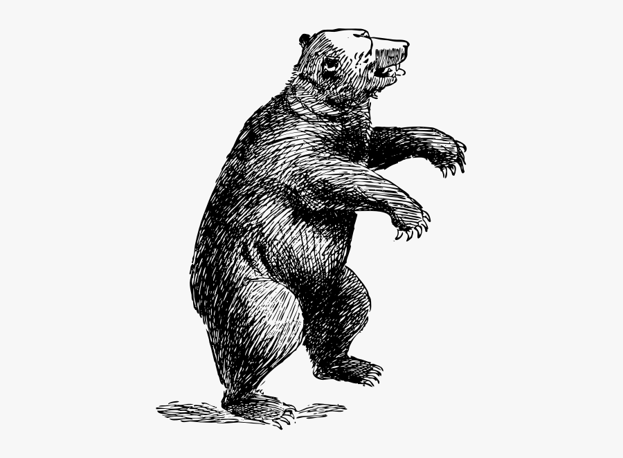 Wildlife,art,grizzly Bear.