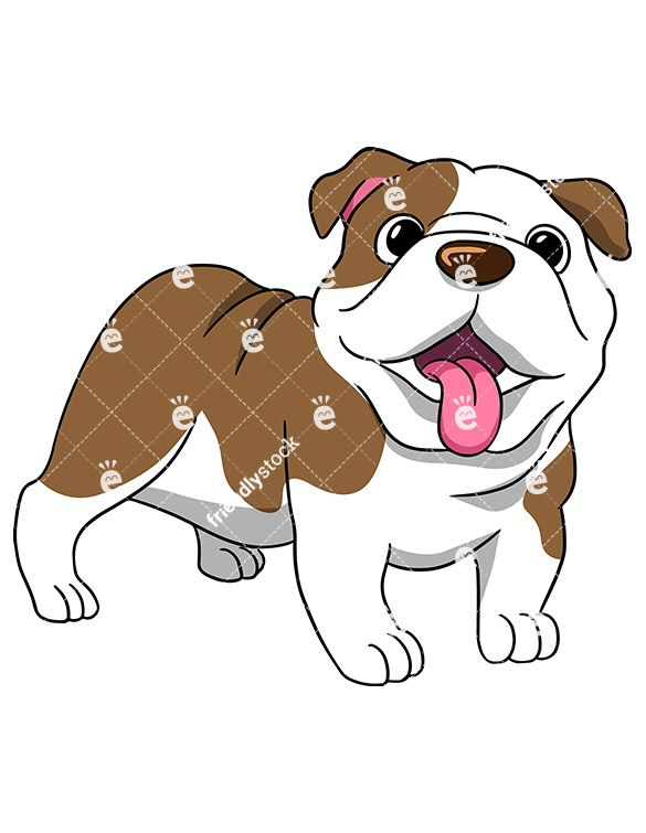 Wrinkly English Bulldog Standing With Its Tongue Hanging Out.