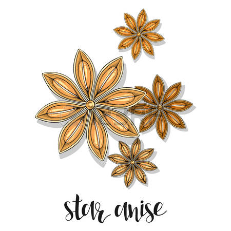 906 Stars Anise Stock Vector Illustration And Royalty Free Stars.