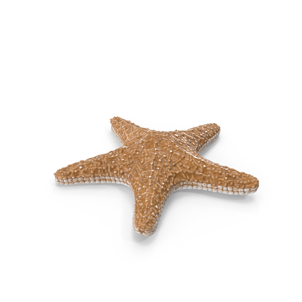Starfish PNG Images & PSDs for Download.