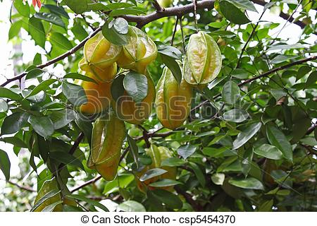 Stock Photography of Star Fruit.