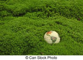 Stock Photography of Moss green background . Star Moss (Tortula.