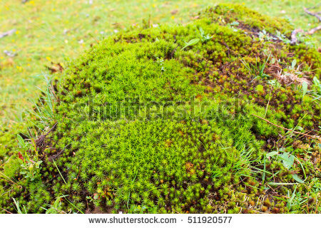Hair Moss Stock Images, Royalty.