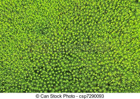 Stock Photos of Star Moss..