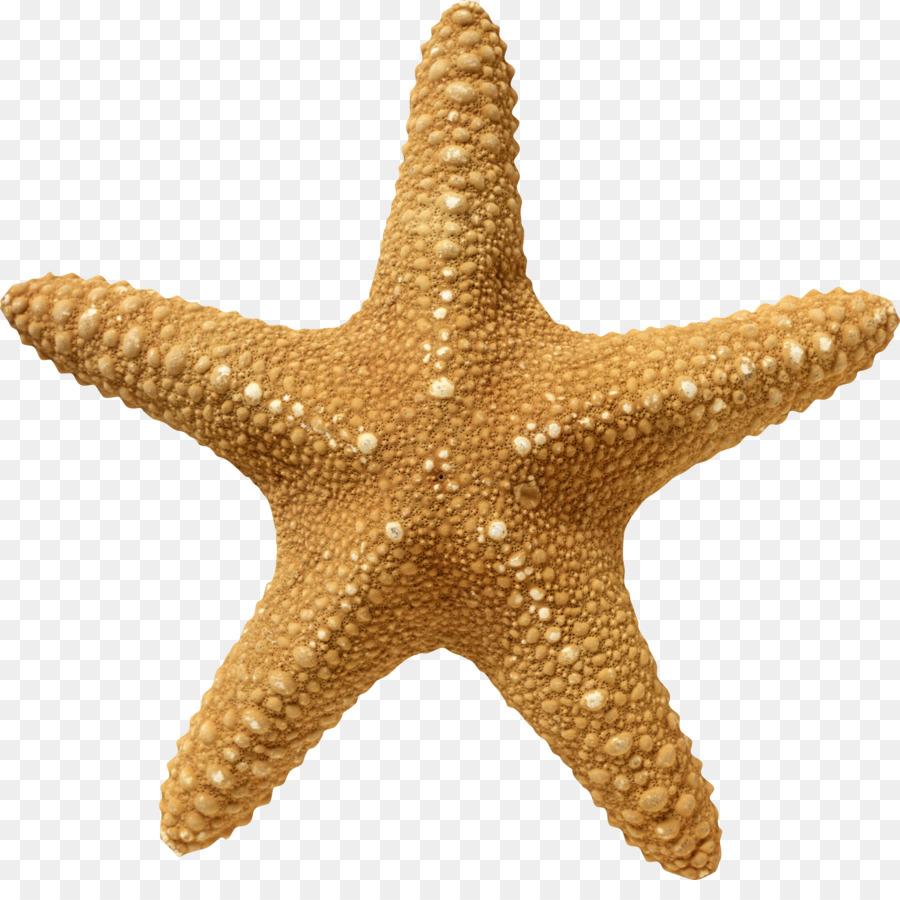 Starfish Cartoon clipart.