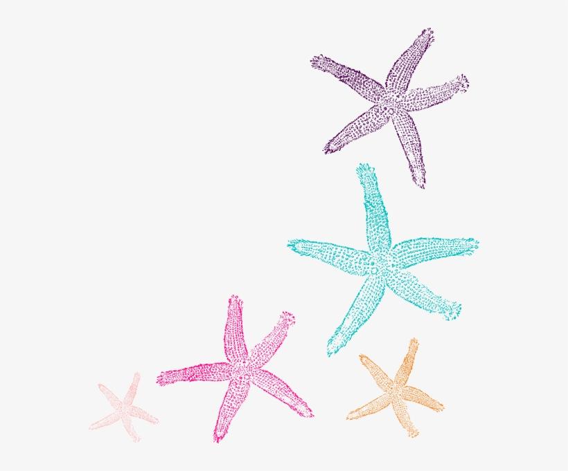 Starfish Border Clipart PNG Image.