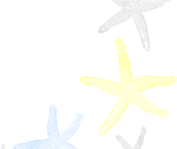 Starfish Corner Border Png Clipart.