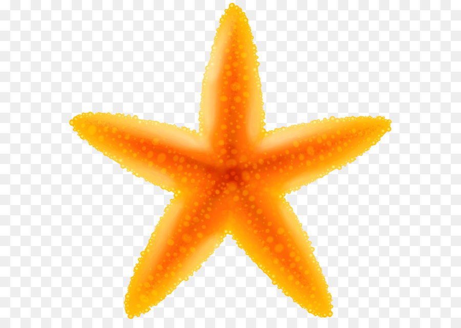 Starfish clipart transparent background » Clipart Station.