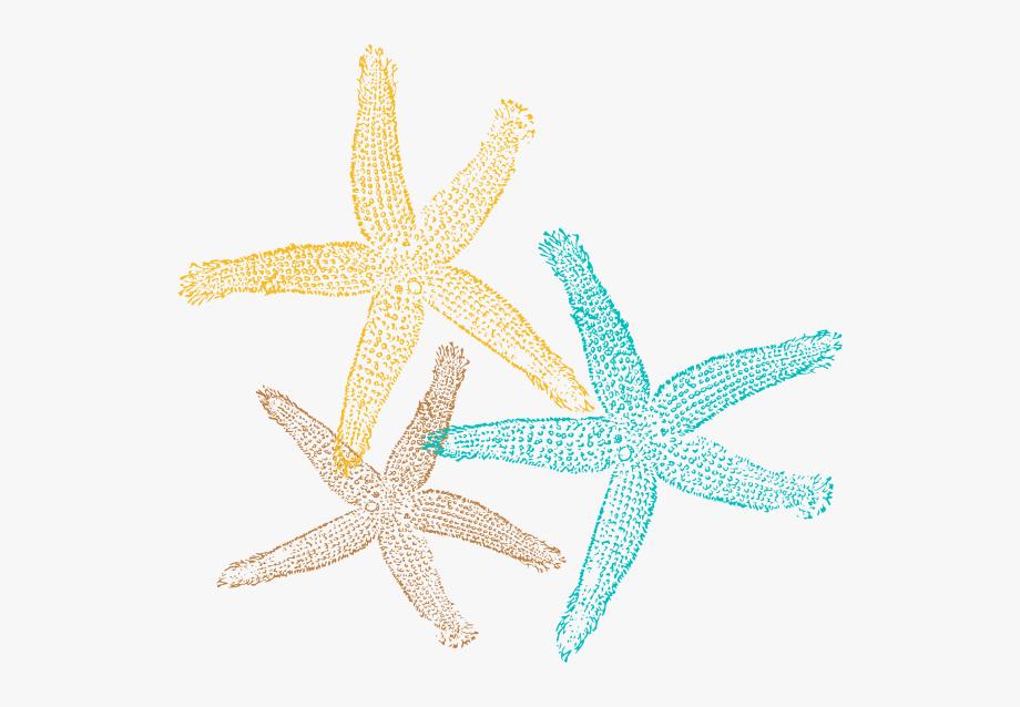 Sea Star Png.