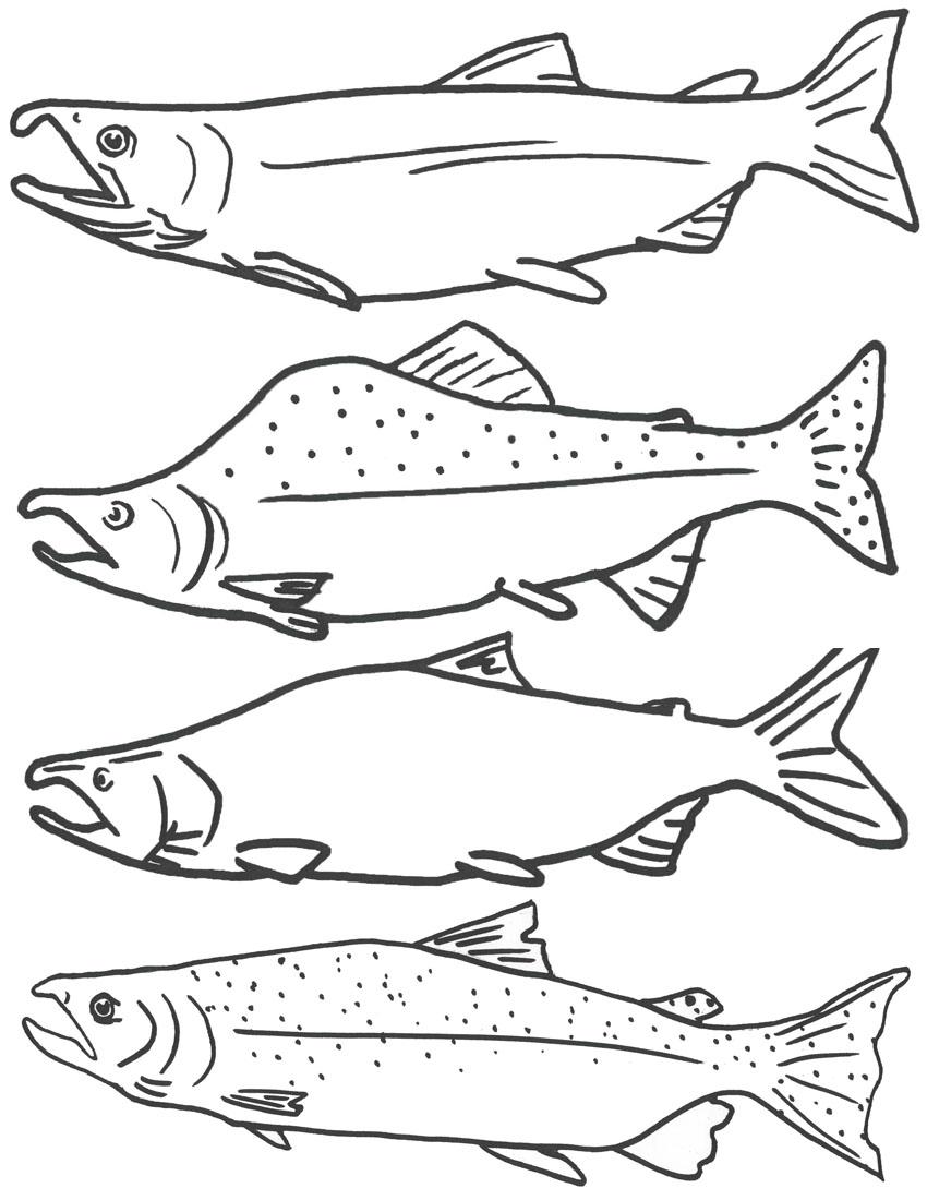 starfish clipart salmon color 20 free Cliparts | Download ...