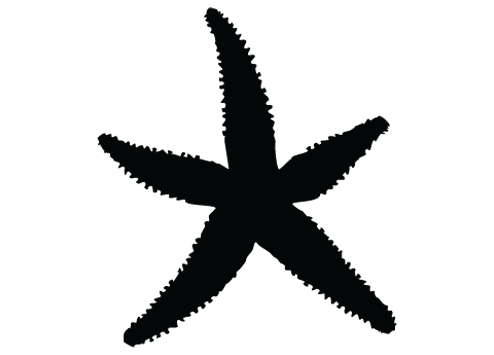 Starfish Clipart Silhouette Clipground