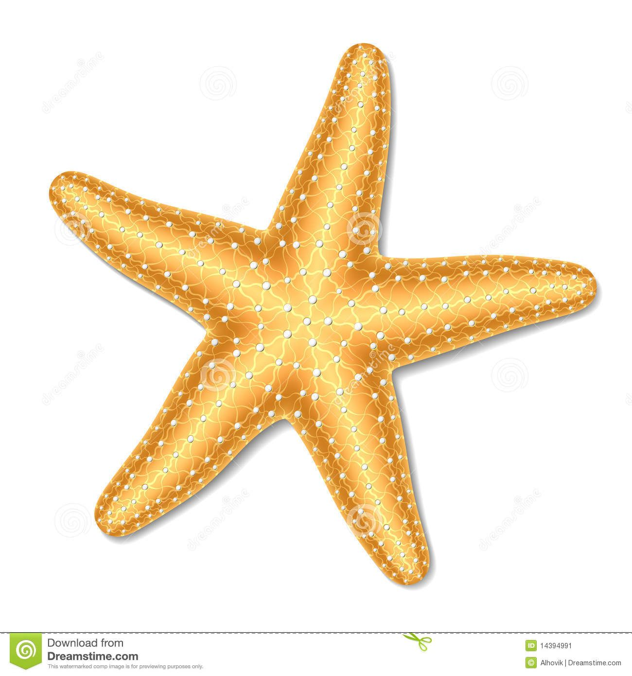 Starfish Stock Image.