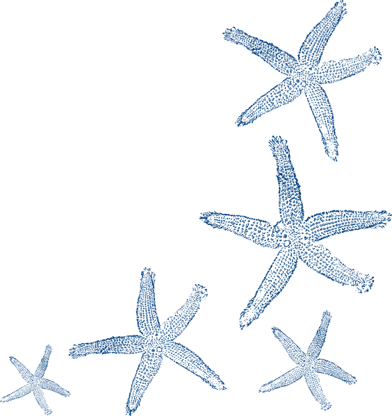 starfish outline clipart clipground