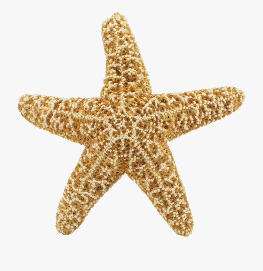 Animated Starfish.