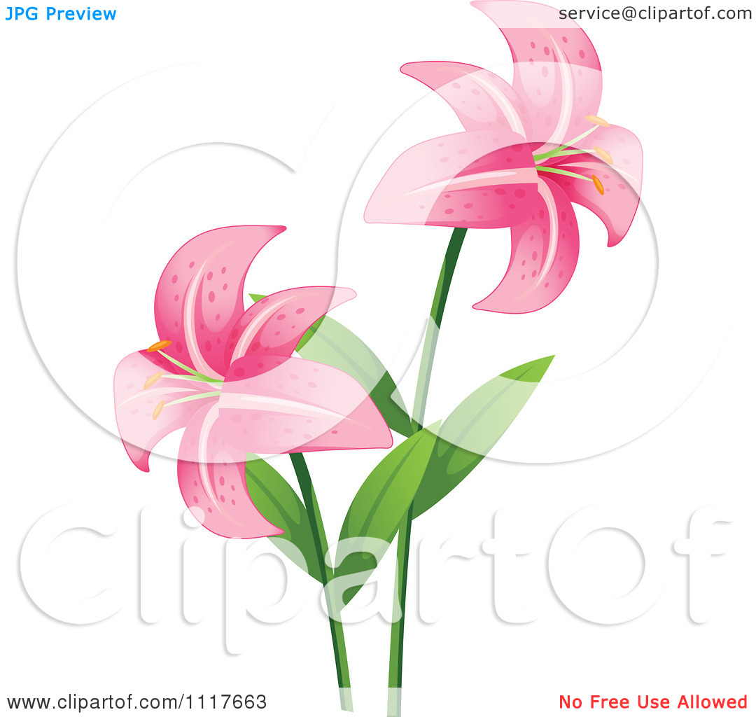 Vector Clipart Two Pink Stargazer Lily Flowers.