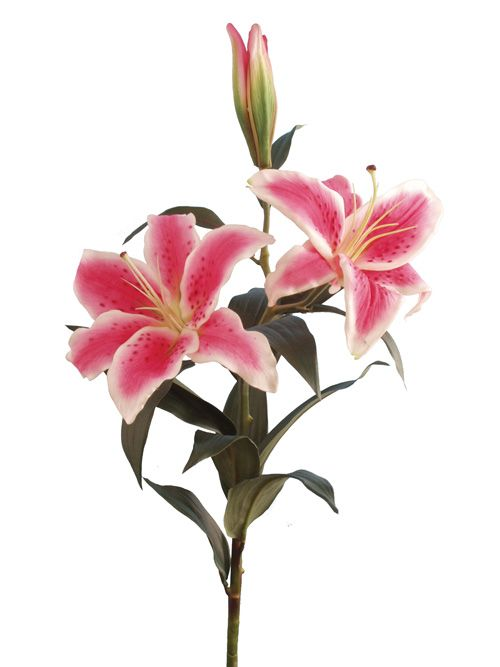 3 lilies stem.
