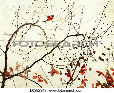 Drawing of Black Branches and Stark Red Flowers on Paper k6392343.