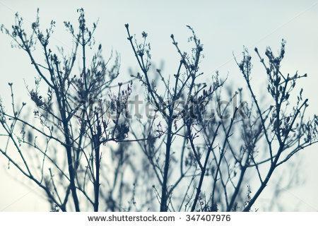 Winter Branches Stock Photos, Royalty.