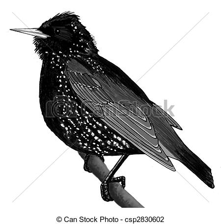 Starling Illustrations and Clipart. 440 Starling royalty free.