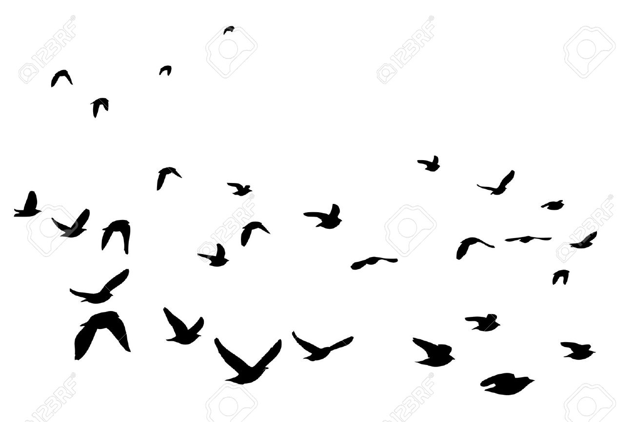 Flock Of European Starling Silhouette Royalty Free Cliparts.