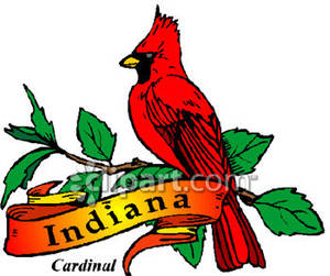 State Bird of Indiana, the Cardinal.