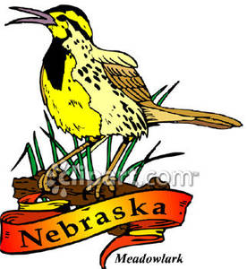Meadowlark, The State Bird of Nebraska.