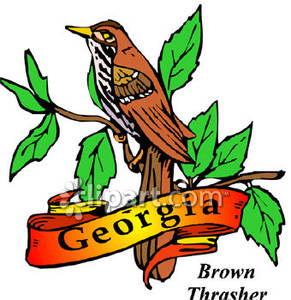 Georgia State Bird Clipart.