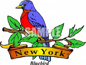 State Bird of New York.