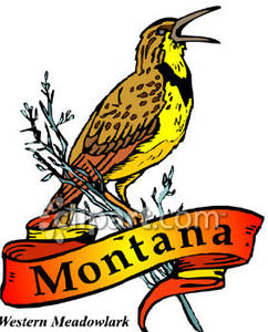 Bird of Montana, The Westen Meadowlark.