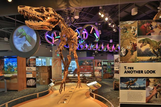 NC Museum of Natural Sciences Exhibits Blog.