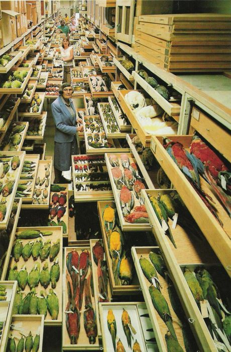 Florida Natural History Museum: Pinterest Interest.