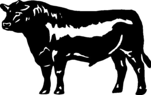 Angus Steer Clipart.