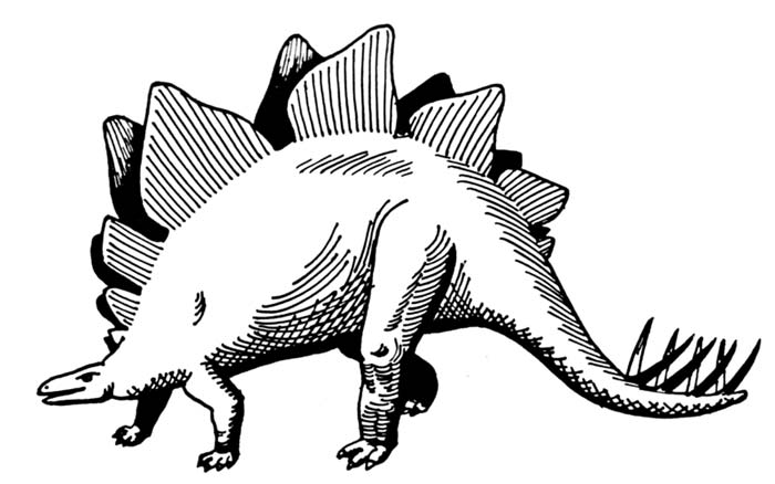 Black & White Stegosaurus Drawing.