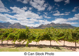 Pictures of The Stellenbosch wine lands region near Cape Town.