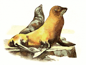 Sea Lion Clip Art Download.