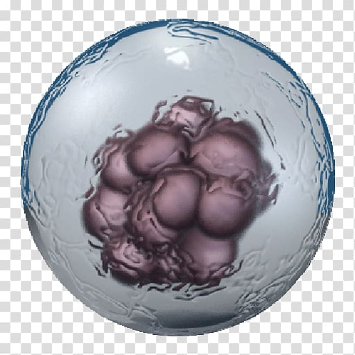 Embryonic stem cell Cell type Adult stem cell, others.