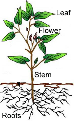 Stem parts clipart #20