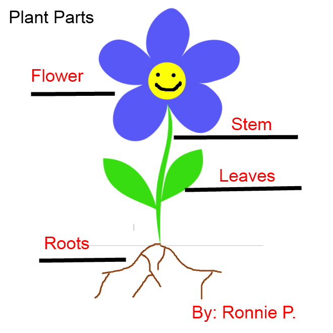 Labeling Flowers, Stems, Leaves, and Roots.