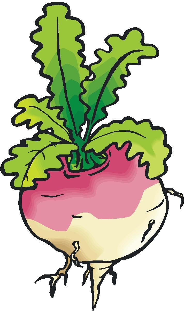 Stem turnip clipart #3