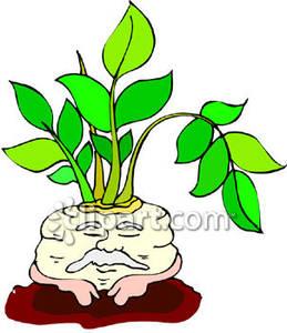 Cartoon Turnip.