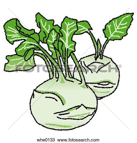 Stem turnip clipart #10