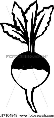 Clip Art of , food, produce, turnip, vegetable, u17104849.