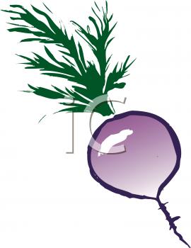 Clipart Turnip.